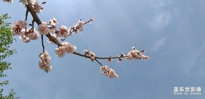 桃花盛开季