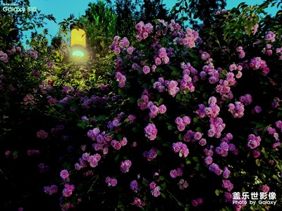 【走四方】+一城山色半城湖,大美济南
