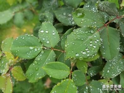 【初夏印象】+雨过之后