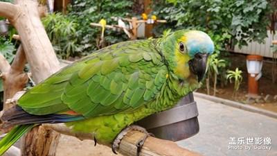 南宫植物园的鹦鹉