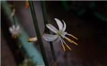 花花草草之 兰