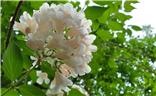 【走进夏天】+白花花