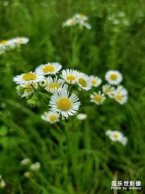 家乡的花花草草