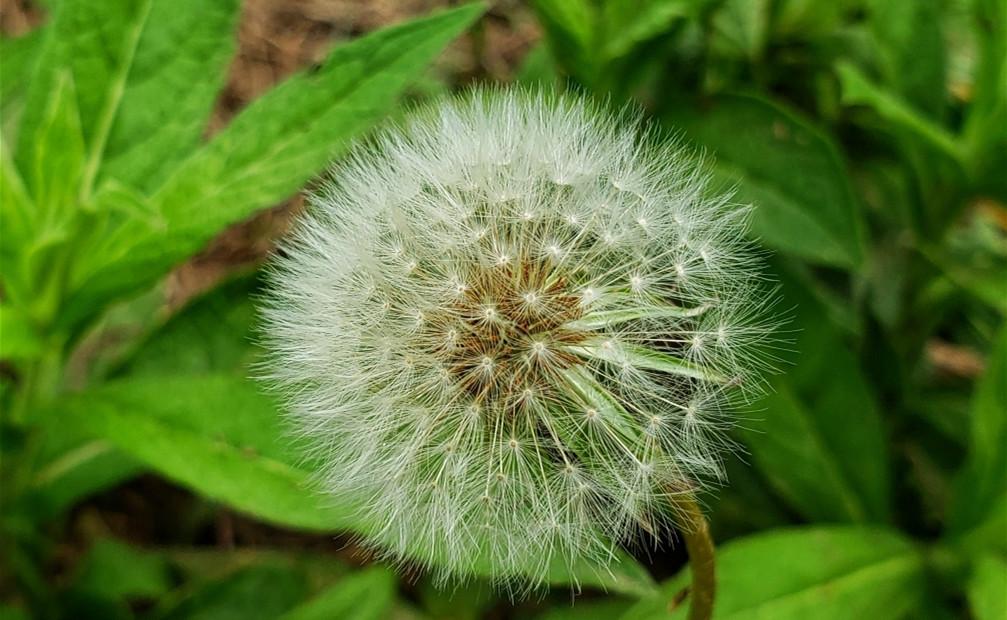 【走进夏天】+微距下的花草