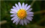 【色彩系列之白色】+白色的小花