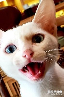 【宠物美照】不配合的白猫