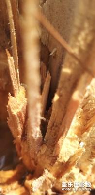 阳光下的木头