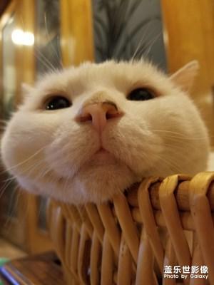 悠闲的猫猫