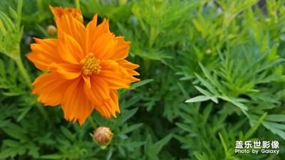 【盛夏光年】+盛夏如花