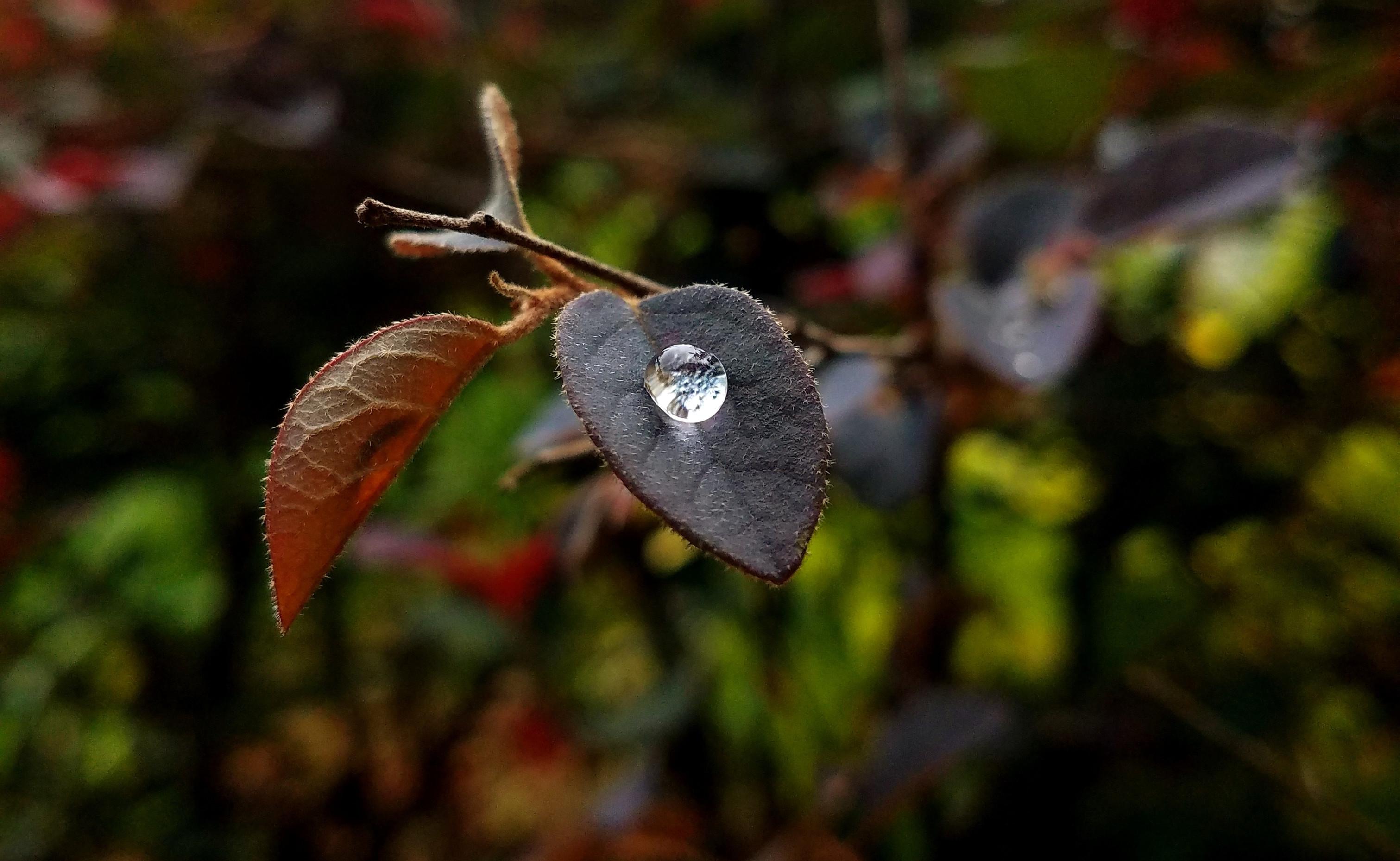 叶上的小雨滴