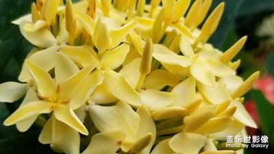 【花开盛夏】+花开有时