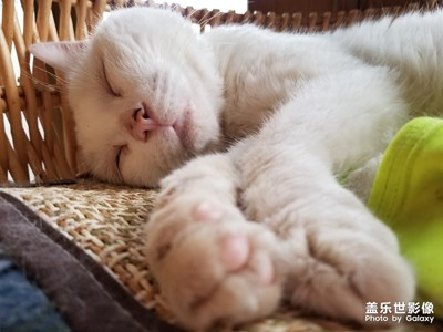 猫猫猫,困困困。。。