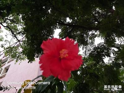 开在半空中的红花