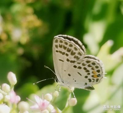 随手拍蝴蝶