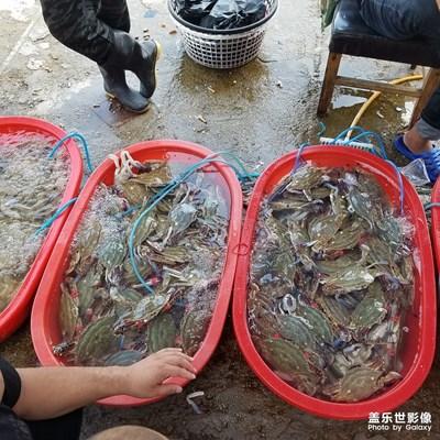 【中秋佳节】+逛海鲜市场