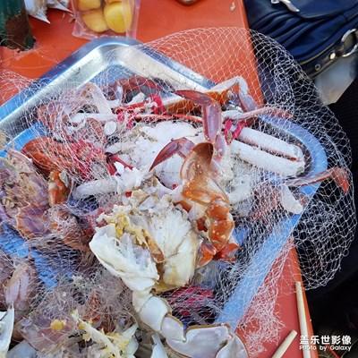 【中秋佳节】+大飞蟹