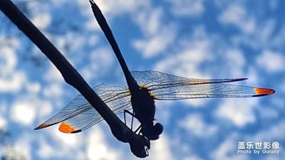 【光影的魅力】+蜻蜓霞光秀