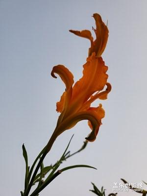 中秋随拍之花花草草