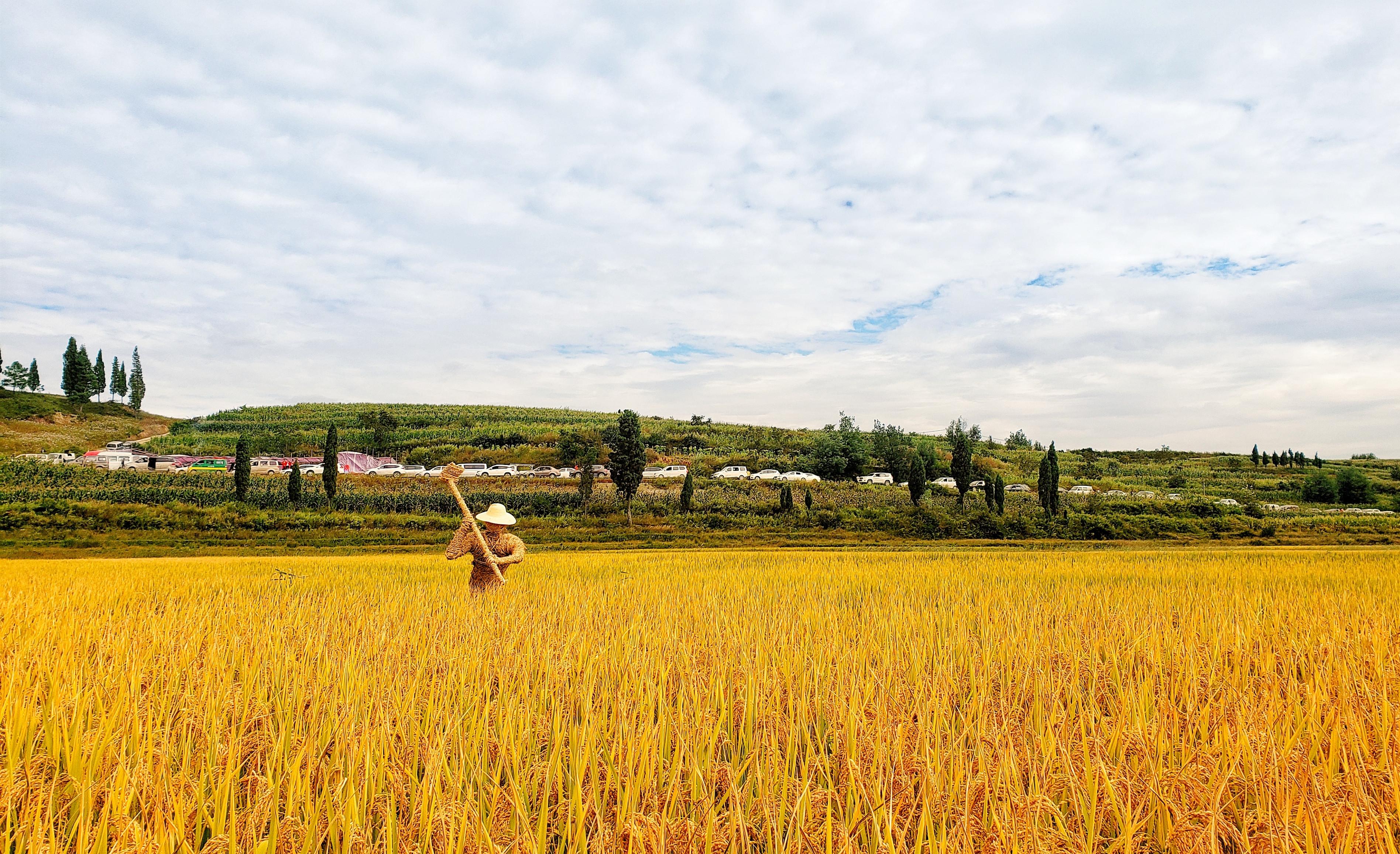 【爱在深秋】+金色的田野