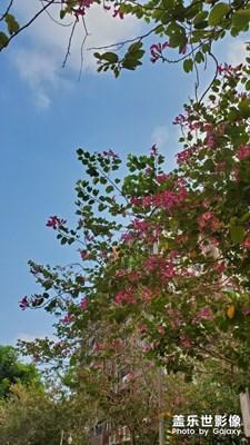 绿叶/鲜花/蓝天/白云