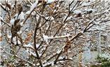 Galaxy S10+ 2019年的初雪