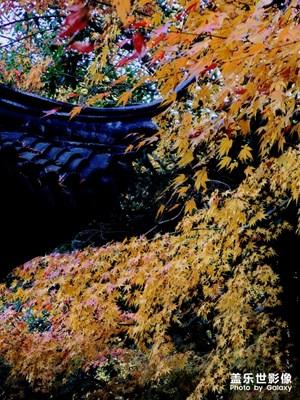 家门口的秋