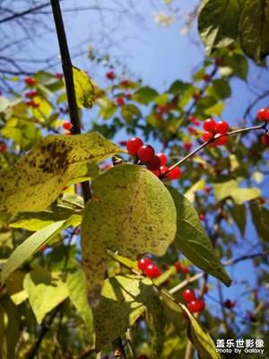十月龙城,秋色斑斓