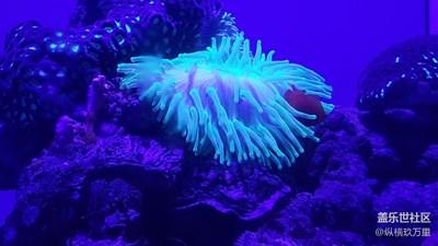 青岛行之海底世界