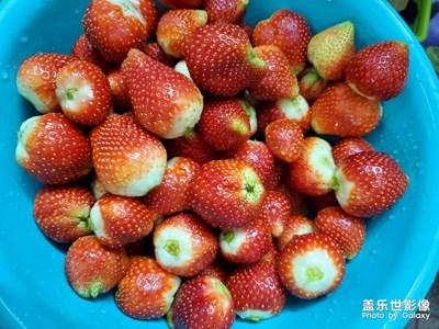 草莓园游记