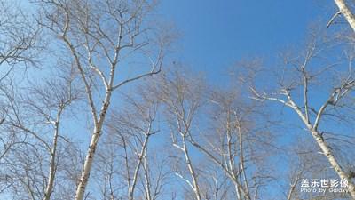【鼠年吉祥】+冬日里的白杨