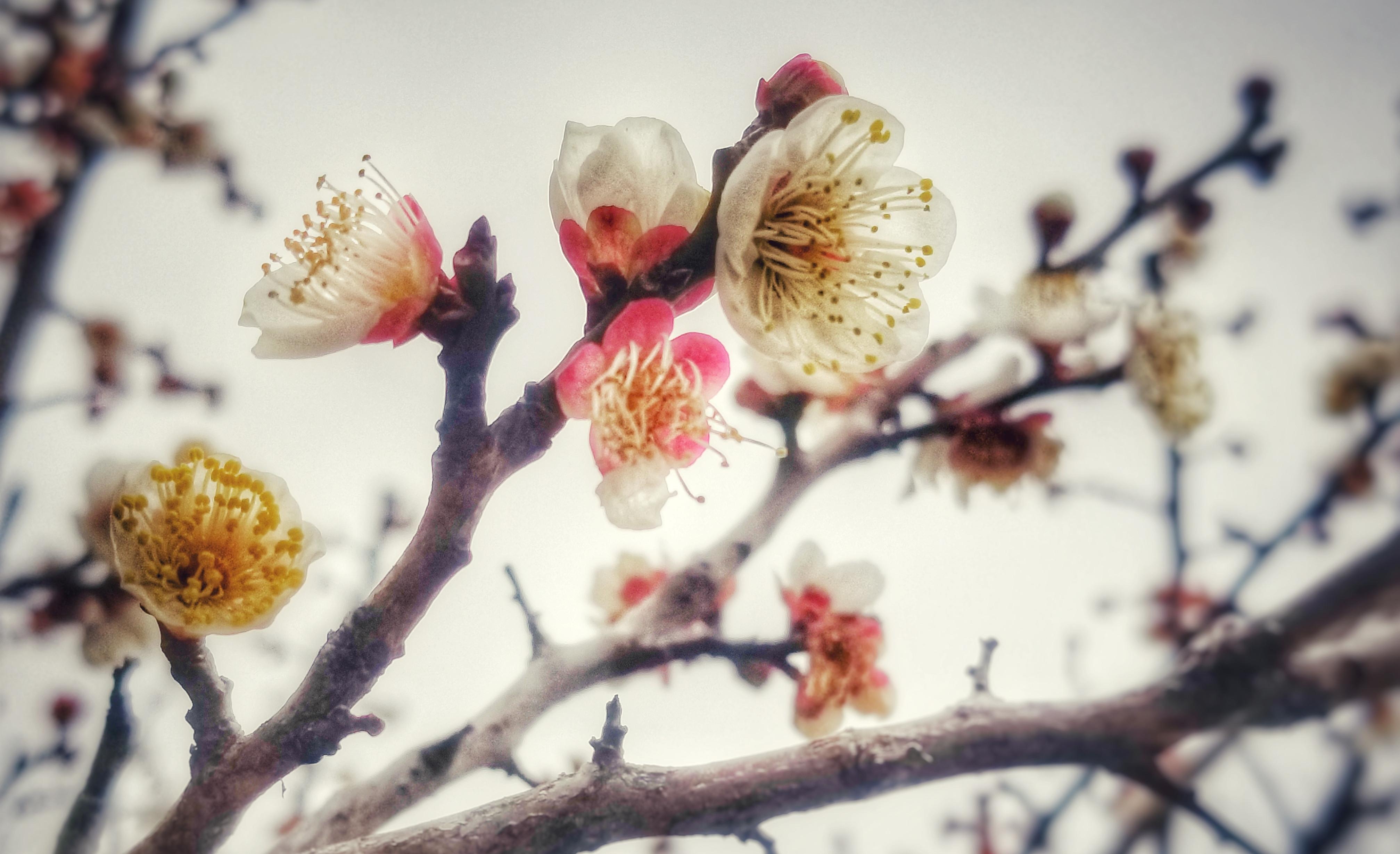 【给最想见的你】待到春暖花开时