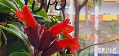 阳台花盛开