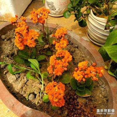 这都是些什么可爱的花儿啊啊啊!