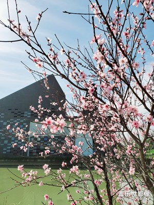 姑苏城的春暖花开