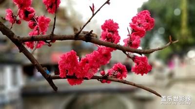 【春花烂漫】+花开的季节
