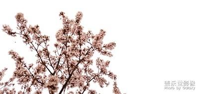 【春花烂漫】+百花争春