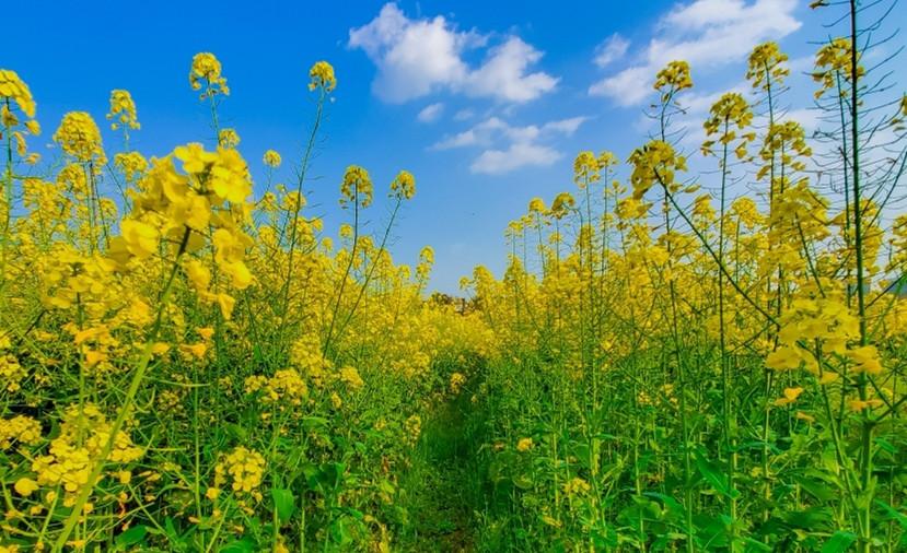 春天来了在田间走走