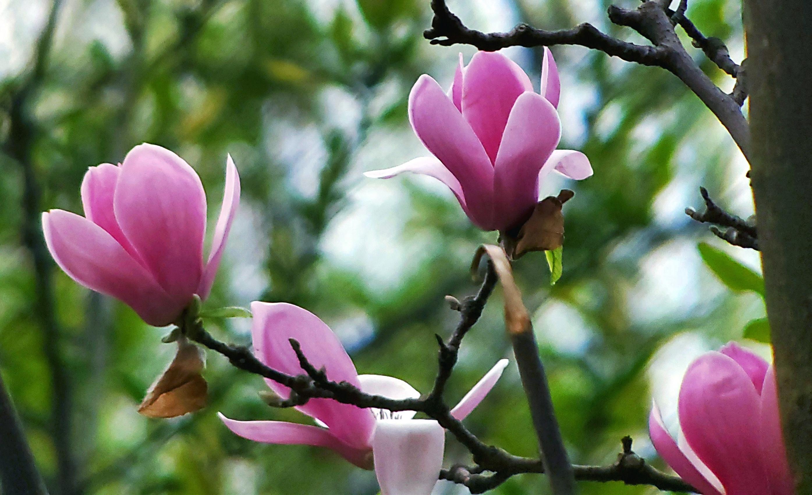 【春花烂漫】花红柳绿又一春