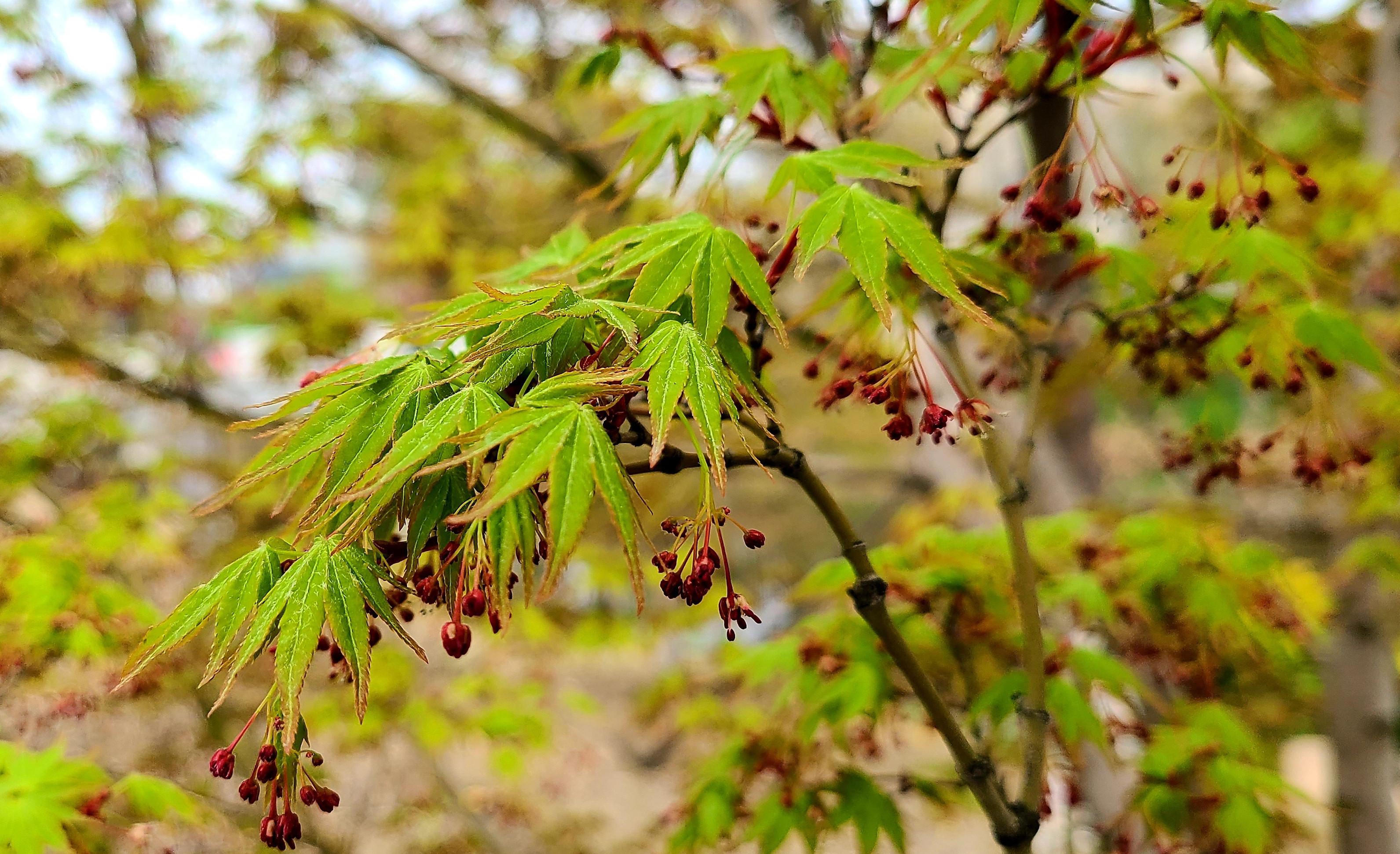 【春花烂漫】春的唤醒