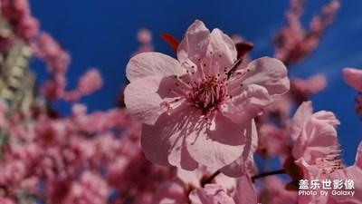 note10+眼里的春花
