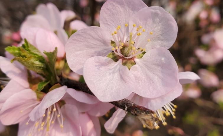 【春花烂漫】+花之美