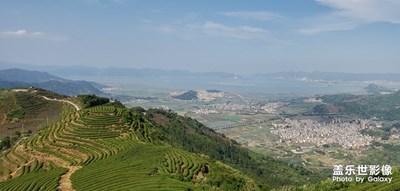 登高·茶场