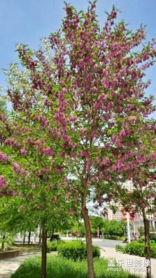 春……暖……花……开……