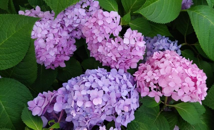夏天的花儿