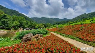 石门森林公园拍花花
