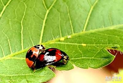 我的虫虫系列之二。