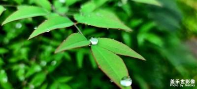 雨什么时候下呀,想为你撑伞呢