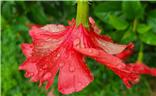 【角度与视觉】+随拍红花绿叶水珠子