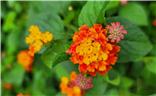 北滨路鲜花
