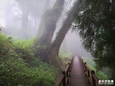 2020/09 雲裡霧裡阿里山